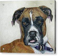Lennox Acrylic Print by Beverly Fuqua
