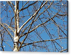 Lenox Sky Acrylic Print by JAMART Photography
