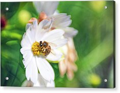 Acrylic Print featuring the photograph Lensbabee 1 by Brian Hale