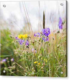 #lensbaby #composerpro #sweet35 #floral Acrylic Print