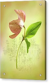 Lenton Rose 1 Acrylic Print