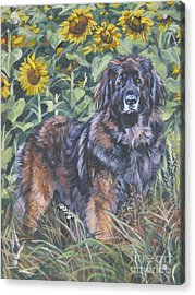 Leonberger In Sunflowers Acrylic Print by Lee Ann Shepard