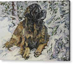 Leonberger In The Snow Acrylic Print