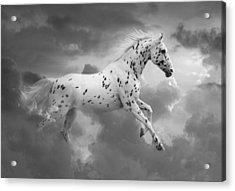 Leopard Appaloosa Cloud Runner Acrylic Print by Renee Forth-Fukumoto