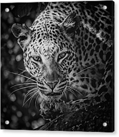 Leopard, Black And White Acrylic Print