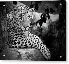 Leopard Acrylic Print by Cesar March
