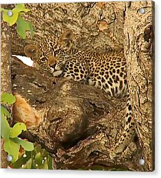 Leopard Cub Acrylic Print