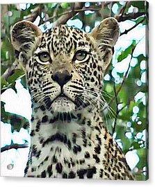 Leopard Face Acrylic Print
