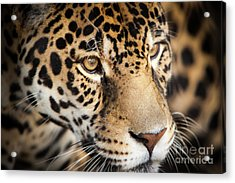 Acrylic Print featuring the photograph Leopard Face by John Wadleigh