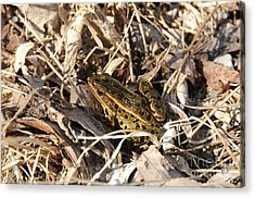 Leopard Frog Acrylic Print by Lana Raffensperger