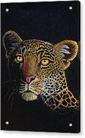 Leopard In The Dark Acrylic Print by Lorraine Foster