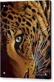 Leopard Acrylic Print by Jurek Zamoyski