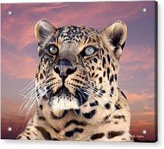 Leopard Portrait Number 3 Acrylic Print