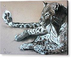 Leopard Sketch Acrylic Print by Derrick Higgins