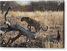 Leopard Tail Acrylic Print