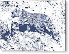 Leopard5 Acrylic Print