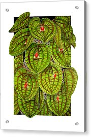 Lepanthes Calodictyon Acrylic Print by Darren James Sturrock