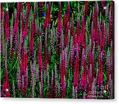Les Fleurs Acrylic Print by Elfriede Fulda