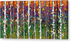 Lessons Of The Birch Acrylic Print by Jessilyn Park