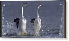 Let Humans Learn From The Nature  Foreplay Dance It Pleases Everyone Acrylic Print