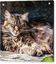 Let Me Sleep... Acrylic Print