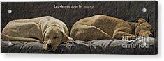Let Sleeping Dogs Lie Acrylic Print by Gwyn Newcombe