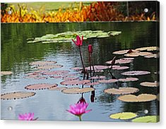 Acrylic Print featuring the photograph Let The Music Lift You by Michiale Schneider