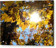 Let The Sun Shine In Acrylic Print by Angela Davies