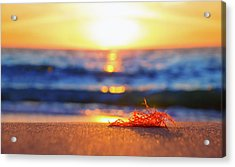 Let The Sunshine In Acrylic Print