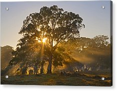Let There Be Light Acrylic Print by Mike  Dawson