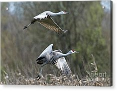 Acrylic Print featuring the photograph Let's Go by Craig Leaper