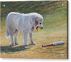 Let's Play Ball - Great Pyrenees Acrylic Print by Danielle Smith