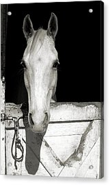 Lets Ride Acrylic Print by JAMART Photography