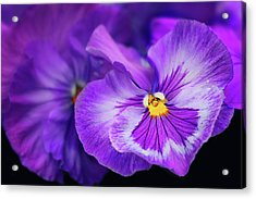 Letters To Violet Acrylic Print