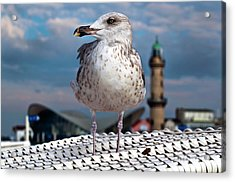 Acrylic Print featuring the photograph Liberty Of An Pacific Gull by Silva Wischeropp