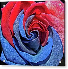 Acrylic Print featuring the photograph Liberty Rose by Judy Vincent
