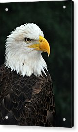 Liberty Three Acrylic Print