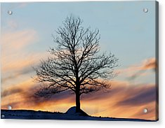 Liberty Tree Sunset Acrylic Print