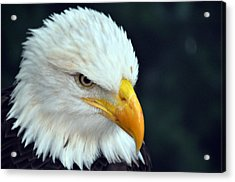 Acrylic Print featuring the photograph Liberty Watching by Teresa Blanton