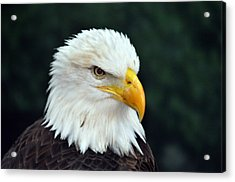 Acrylic Print featuring the photograph Liberty Watching Two by Teresa Blanton