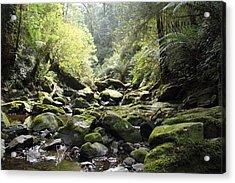 Lichen And Moss 2 - Nature Acrylic Print