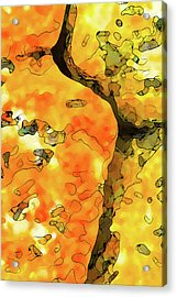 Lichen Abstract Acrylic Print