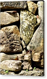 Lichen And Moss Acrylic Print by Jan Amiss Photography
