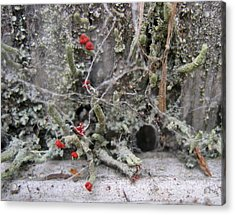 Lichen And Old Fence #1 Acrylic Print