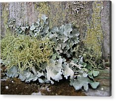 Lichen And Old Fence #2 Acrylic Print