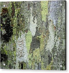 Lichen And Old Fence #5 Acrylic Print