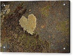 Acrylic Print featuring the photograph Lichen Love by Mike Eingle