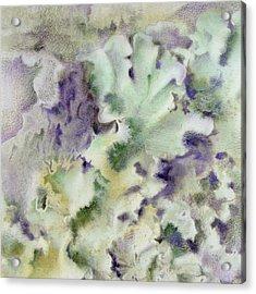 Lichen Acrylic Print by Mindy Lighthipe
