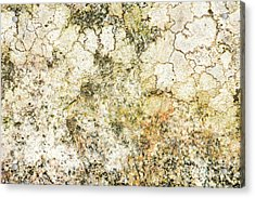 Acrylic Print featuring the photograph Lichen On A Stone, Background by Torbjorn Swenelius