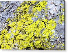 Acrylic Print featuring the photograph Lichen Pattern by Christina Rollo
